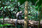 Un macaque en pleine pause gouter