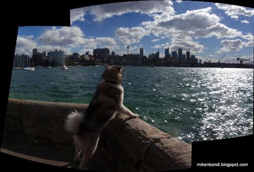 Yarranabbe Park - Sydney CBD skyline