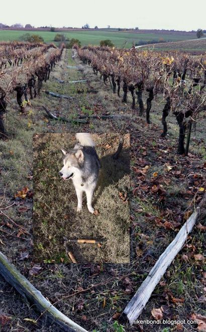 2010-11-22 Vines