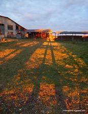 Long legged shadows