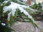 Dzień wita nas zmrożonym śniegiem na drzewach