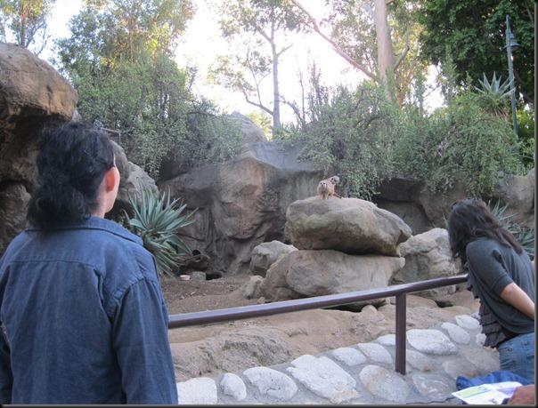 zoo! 001
