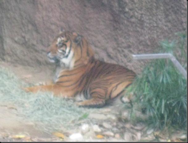 zoo! 011