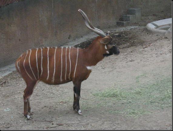 zoo! 053