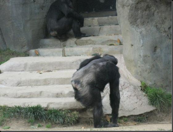 zoo! 086