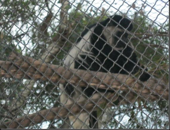 zoo! 092