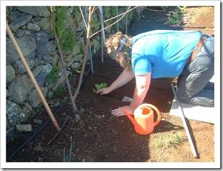 Helen Planting the Lettuce