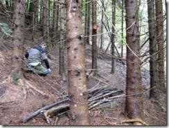 Il filo spinato circoscrive il perimetro dell'esca. Una è sotto la catasta di legna, l'altra nel vaso appeso sul tronco in alto in secondo piano