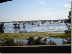 Atchafalaya swamp 1