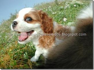 1220463838_puppies-23