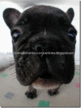 1220463840_puppies-48