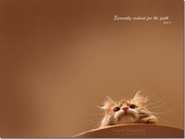 cat_775_1024x768