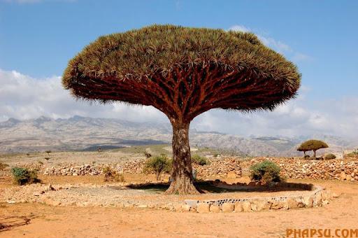 a_tree_that_640_12.jpg
