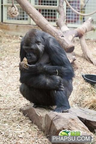 gorilla_wtf_04.jpg