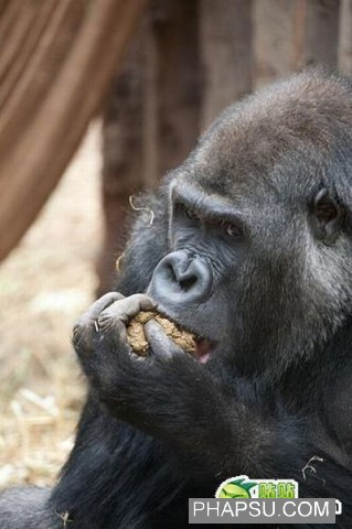 gorilla_wtf_09.jpg