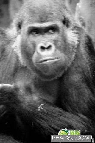 gorilla_wtf_11.jpg