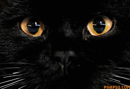 animal_eyes_640_06.jpg
