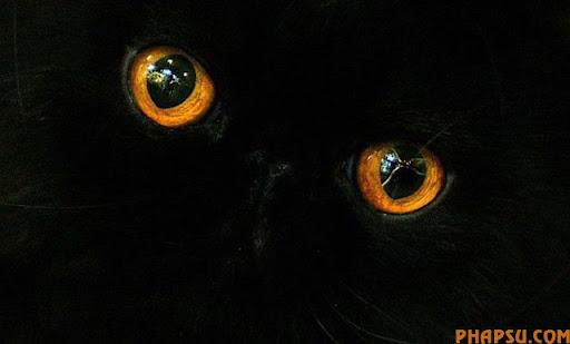 animal_eyes_640_11.jpg