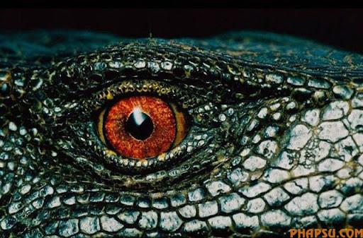 animal_eyes_640_13.jpg