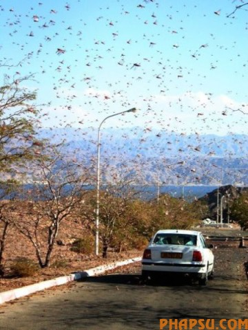 swarms_of_different_640_26.jpg