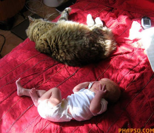 fatty_cats_640_23.jpg