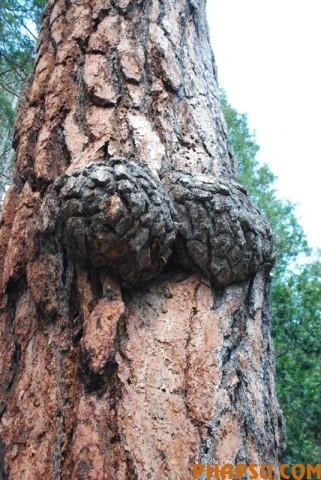 tree_06.jpg