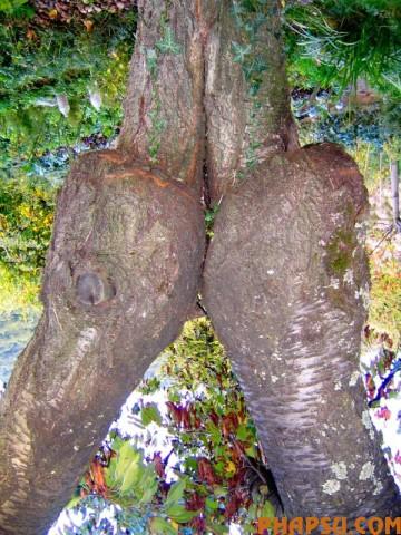 tree_14.jpg
