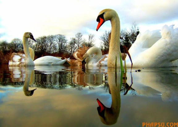 striking_reflective_photography_640_22.jpg