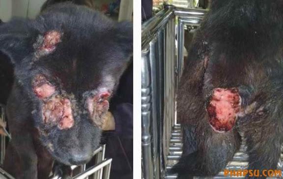 xixi-foshan-dog-abused-03-560x355.jpg