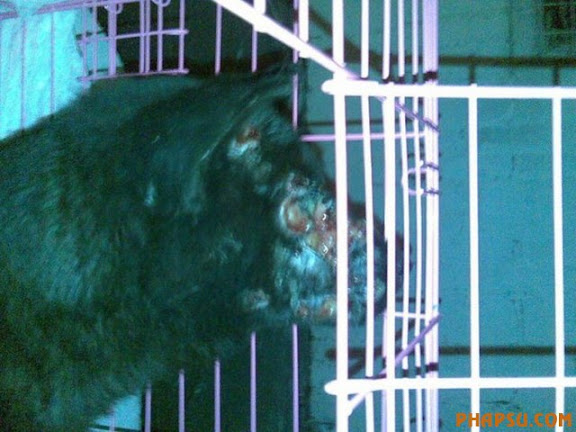 xixi-foshan-dog-abused-04-560x420.jpg