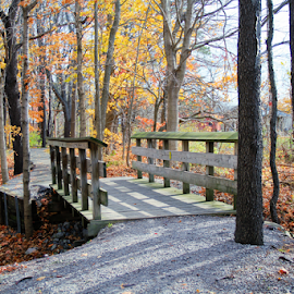 Wooden Walkway by Marsha Biller - Buildings & Architecture Bridges & Suspended Structures ( footbridge, path, trees, autumn colors, woods, wooden bridge,  )