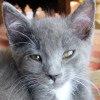 Twinkletoes_closeup