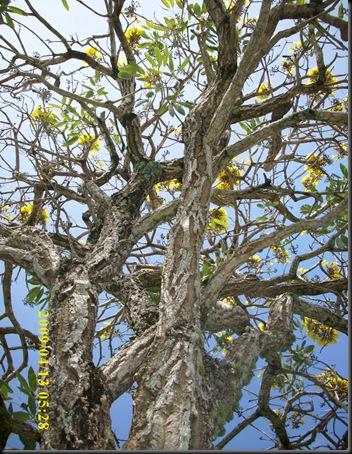 Upward Tree