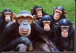 primates3