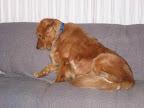 Caught_sleeping_on_the_sofa.jpg