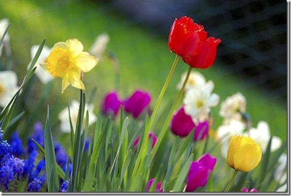 spring flowers[11]