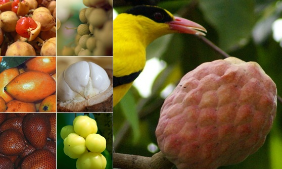 View Malaysian Fruits