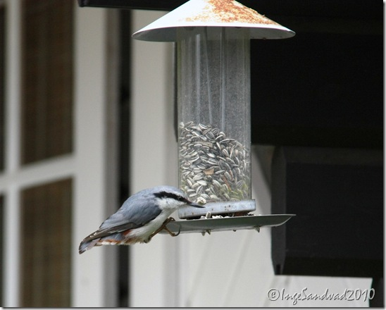 Fugle i skomven 004