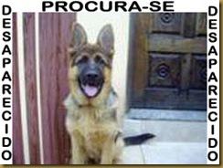 p23_camila