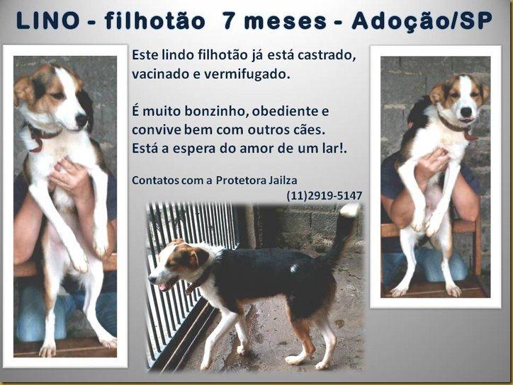 Lino_doacao