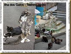 ilhadosgatos (9)