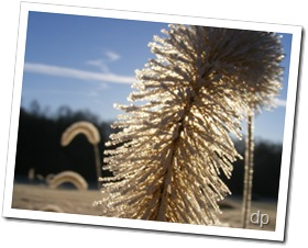 frost on fox tail