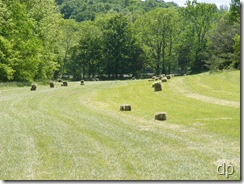 Bales in the field