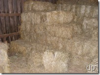hay in the loft