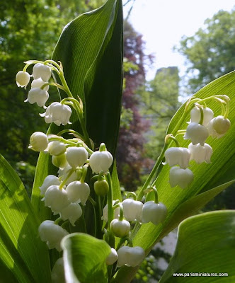Un Brin de Muguet - Lily of the Valley