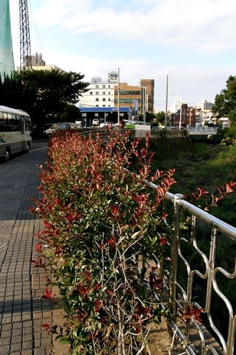Life in Jeju 30 Fall ฤดูใบไม้ร่วงแต่ยังเขียวปี๋อยู่เล้ย
