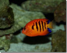 Aquarium 038