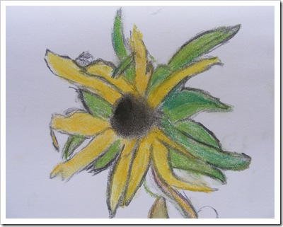 sunflower head charcoal and pastels
