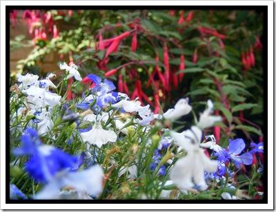 fairy_garden_by_simonruddphotos