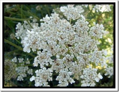 white_flower_on_bank_by_simonruddphotos